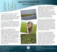 cordgrass_poster