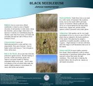 needlerush_poster
